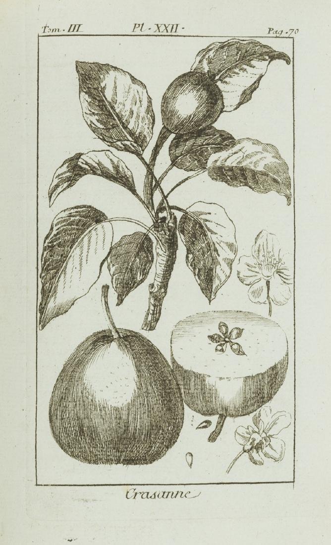 Fruit-Trees.- Duhamel du Monceau (Henri Louis)