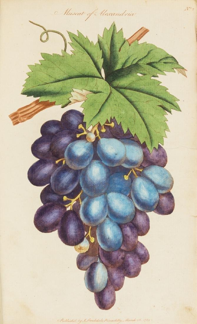 Fruit.- Abercrombie (John) The Hot House Gardener on