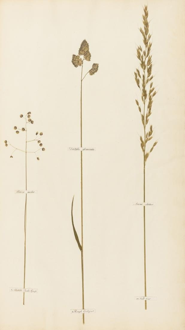 Grasses.- Swayne (G.) Gramina Pascua: or, A Collection