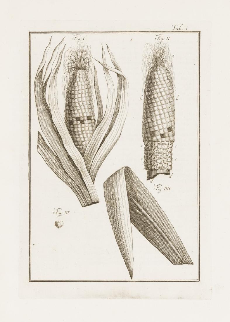 Maize.- Zecchini (P.I.) De Grano Turcico libri tres,