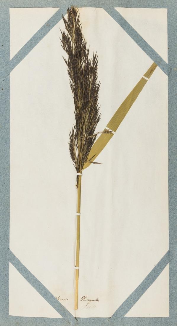 Grass.- Salisbury (William) Hortus Siccus Gramineus,