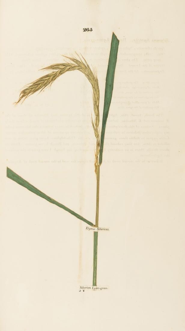 Grasses.- Russell (John, 6th Duke of Bedford).-