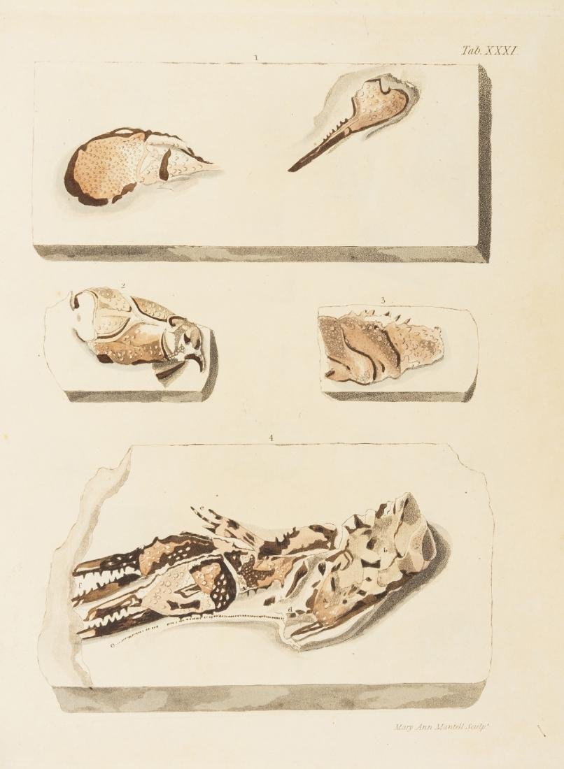 Fossils.- Mantell (Gideon) The Fossils of the South