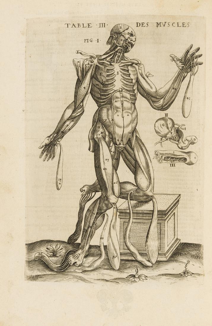 Anatomy.- Guillemeau (Jacques) Tables Anatomiques avec