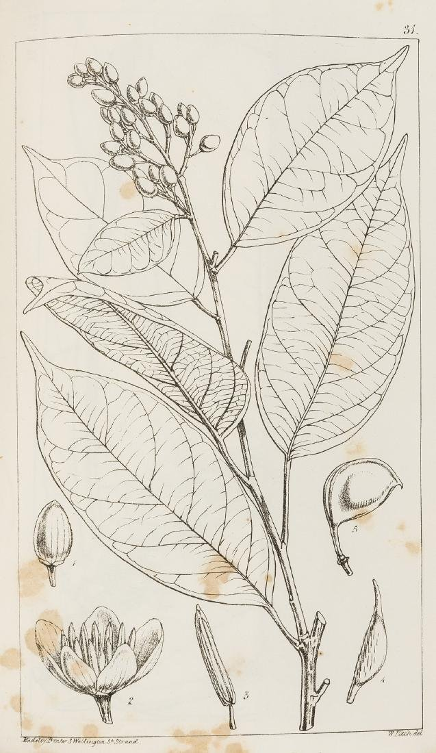 Hooker (Sir William Jackson) Niger Flora, first