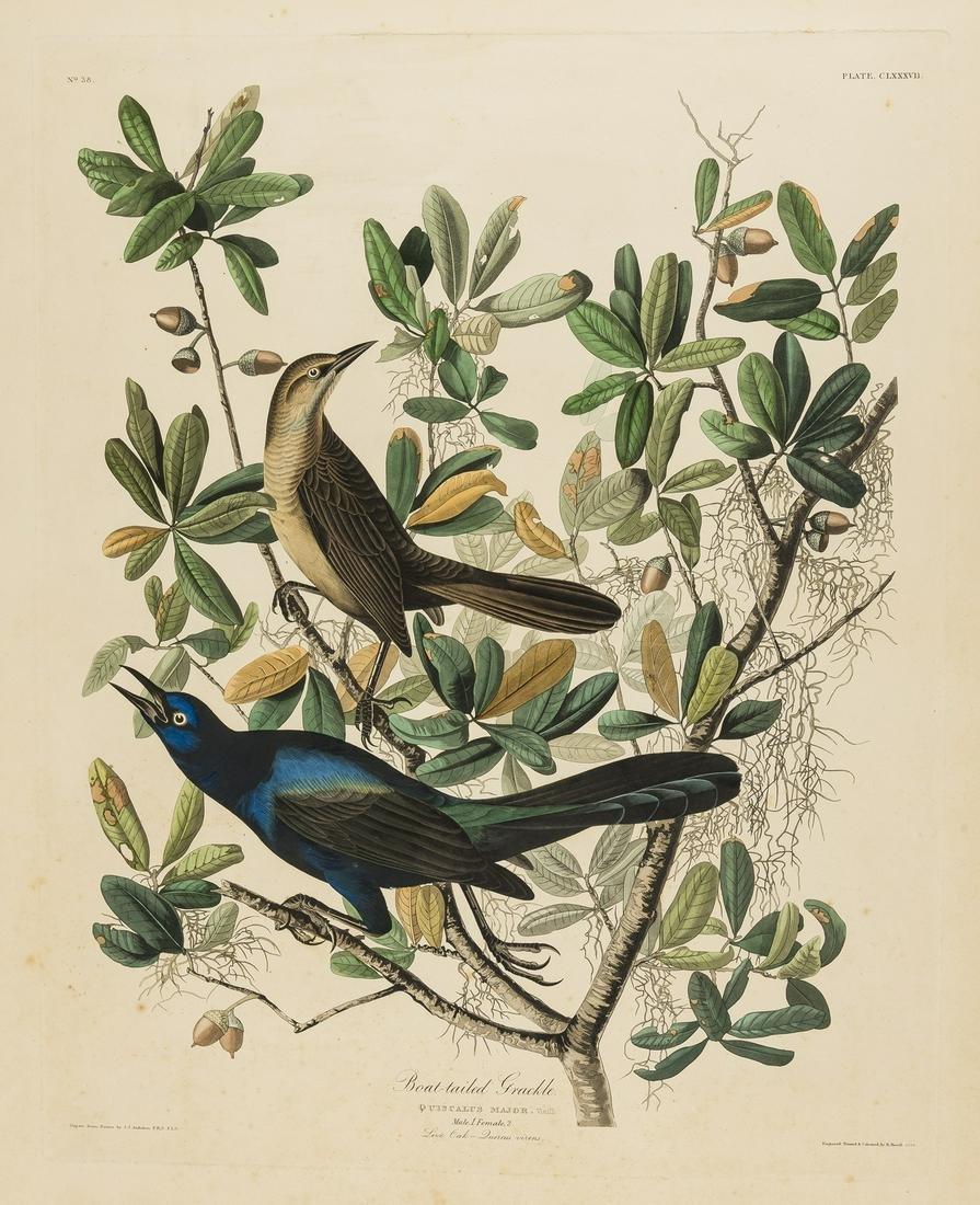 Birds.- Audubon (After John James) A group of seven