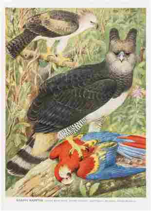 Birds.- Swann (H. Kirke) & Alexander Wetmore. A
