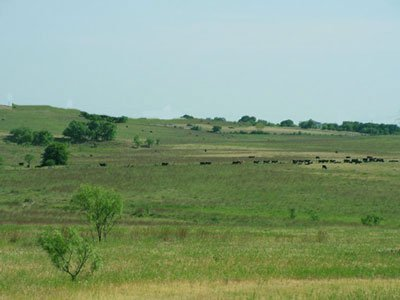 1401: Loving TX 40 ac OLD CATTLE RANCH~STR. SALE SPECIA