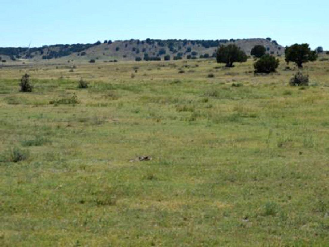 BEAUTIFUL 40 ACRE LAND IN BENT COUNTY, COLORADO! TAKE