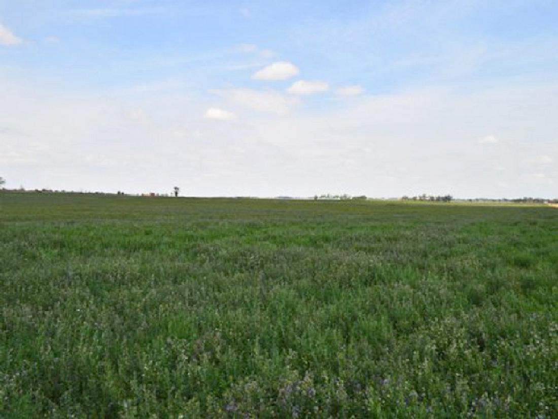 BEAUTIFUL 40 ACRE LAND IN BENT COUNTY, COLORADO! TAKE - 2