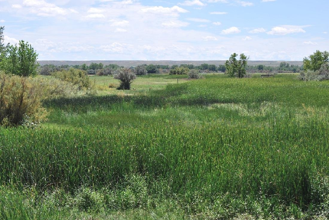 BEAUTIFUL 40 ACRE LAND IN BENT COUNTY, COLORADO! TAKE - 5