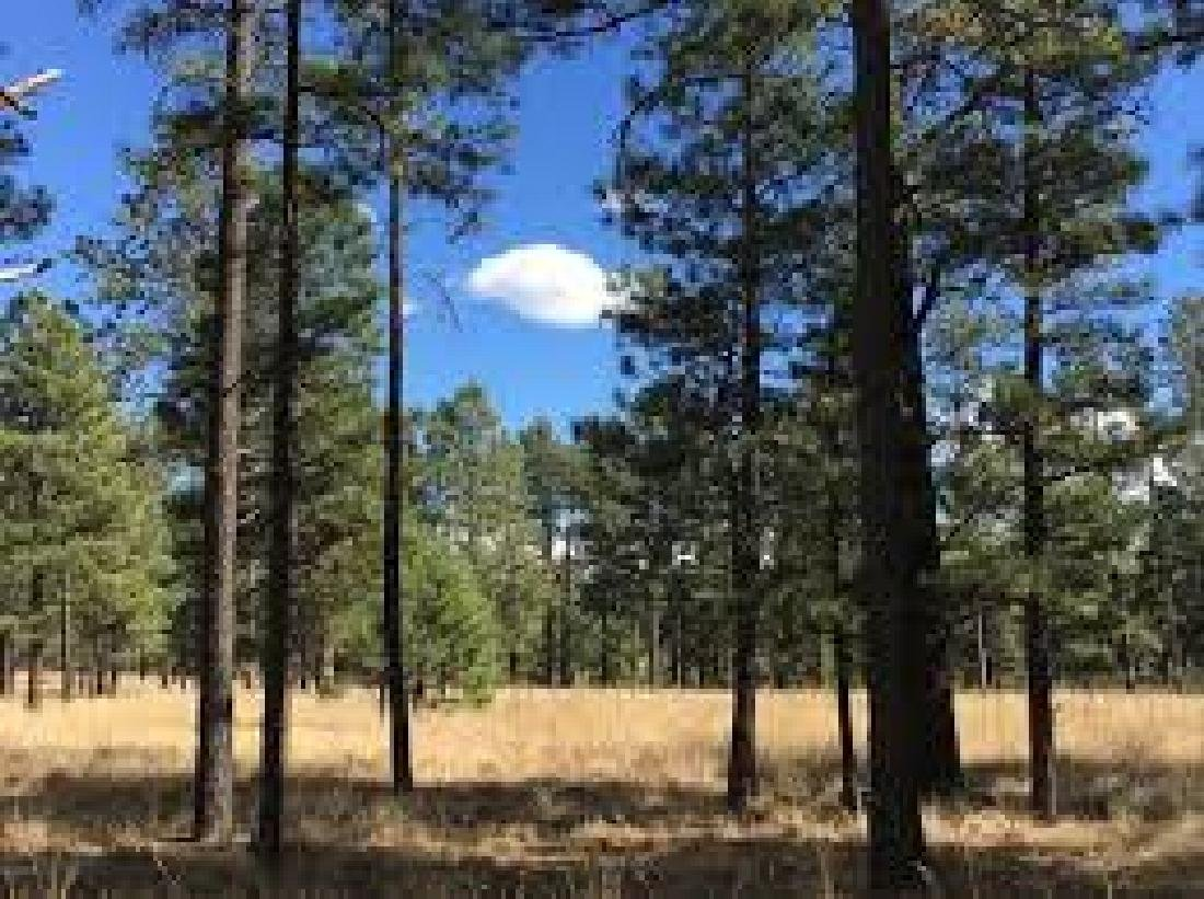INCREDIBLE ARIZONA LAND! 10 ACRES IN APACHE COUNTY! - 3