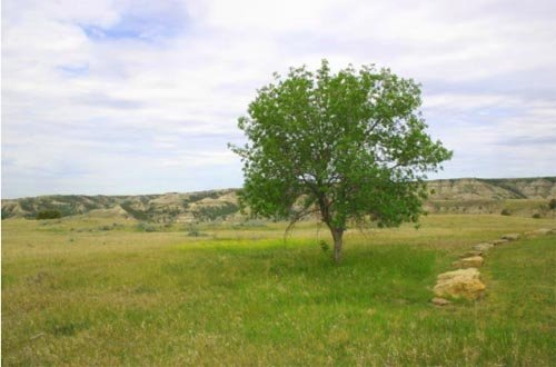 6006: GOV: ND LAND, RECREATION, HUNTING, CAMPING