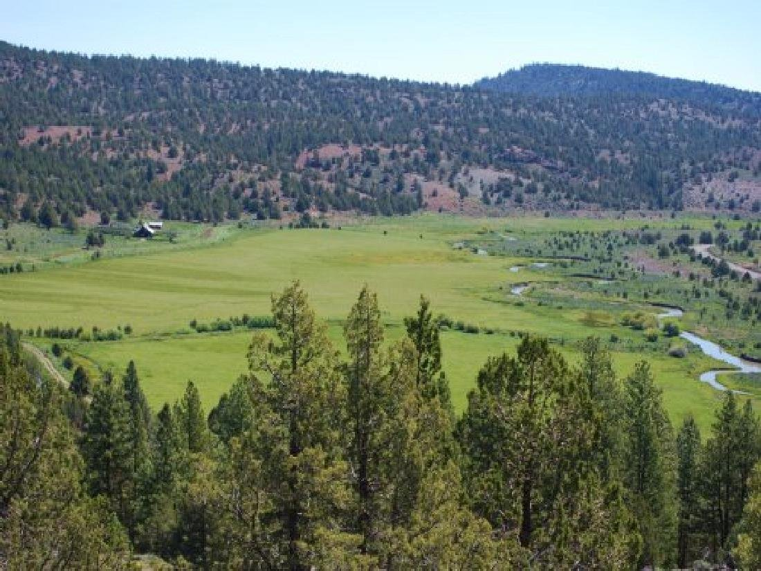 GORGEOUS BID AND ASSUME FORECLOSURE! INCREDIBLE LAND IN - 2