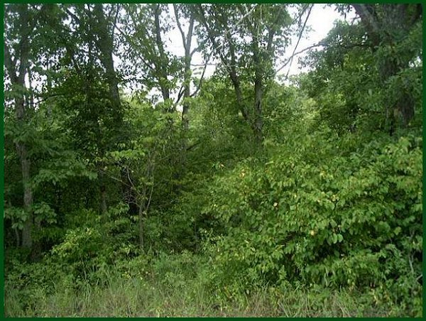 634: GOV: MO LAND, 2.780 AC.LAKE SUBDIVISION, $88/mo