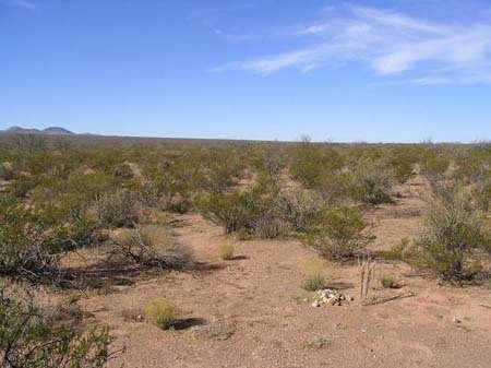 1622: GOV: TX LAND, 10 AC., RANCHETTE NEAR, B&A $139/mo