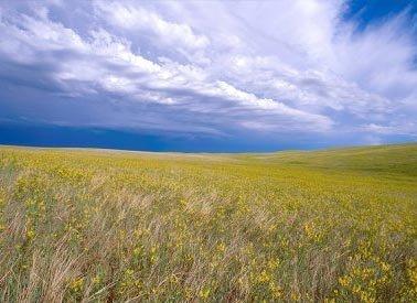 15: GOV: SD LAND, AGRICULTURAL AREA, STR SALE