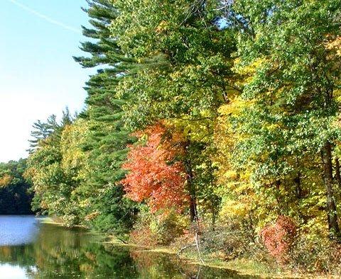 1640: GOV: NY LAND, GREAT INVESTMENT-STR SALE