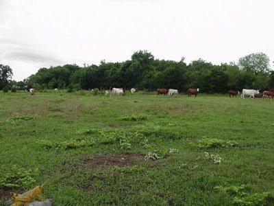 1836: GOV: TX LAND, 40 AC. LOVING / WARD, B&A $249/mo