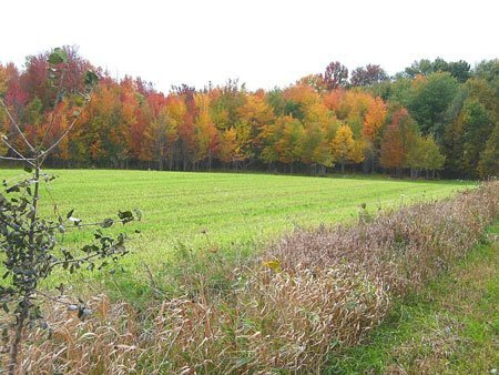 4033: GOV: CANADA LAND, 162.5 Acres, ONTARIO - B&A $397