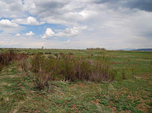 1519: GOV: CO LAND, 5 AC. RANCHETTE, B&A $149/mo
