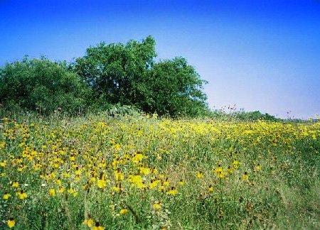 609: GOV: TX LAND, 5.29 AC. RANCHETTE, INVEST! STR SALE