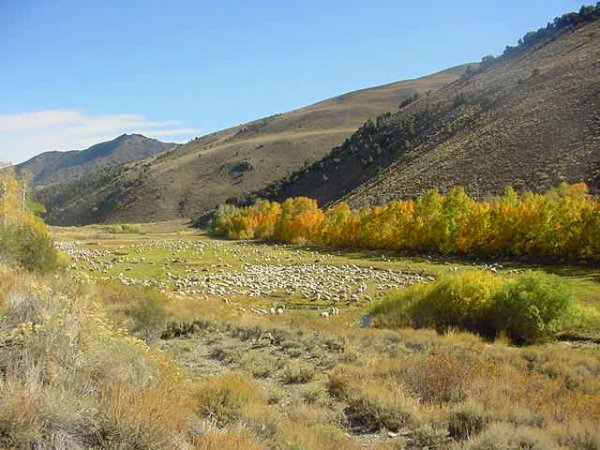 4536: GOV: NV LAND, 40.35 AC. RANCHETTE VIEWS, B&A $249
