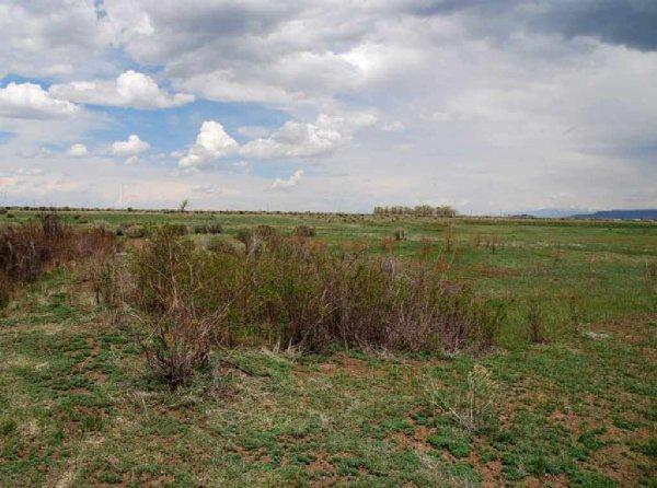 1505: GOV: CO LAND, RANCHETTE, INVEST VIEWS, STR SALE