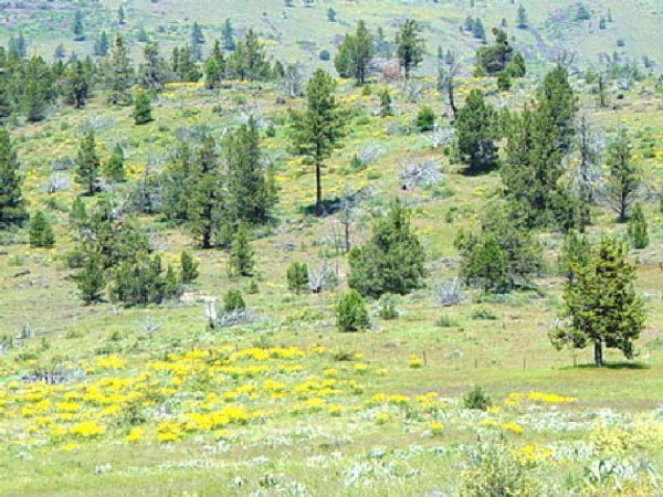 3486: GOV: CA LAND, CALIF. PINES-LAKES-STREAMS-INVEST,