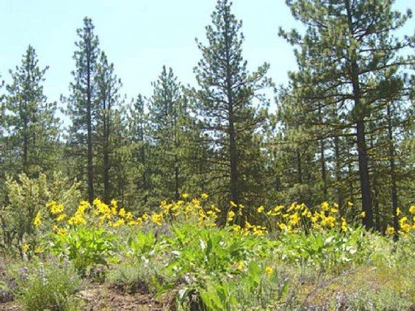 36: GOV: CA LAND, 1.17 AC., CALIF. PINES-LAKES-STREAMS-