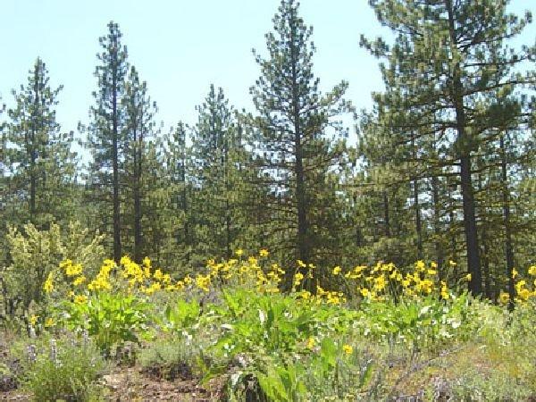 GOV: CA LAND, 1 AC. CALIF. PINES-LAKES- B&A $167/mo