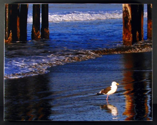 Gull Reflection - Stretched Canvas Giclée - Print