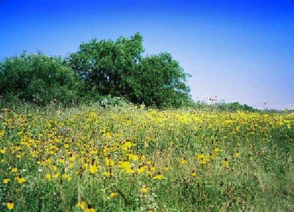 GOV: TX LAND, 10 AC., PECOS COUNTY STRAIGHT SALE