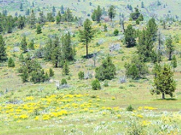 CA LAND, 1 AC. CALIFORNIA PINES, RECREATION-B&A $159/mo