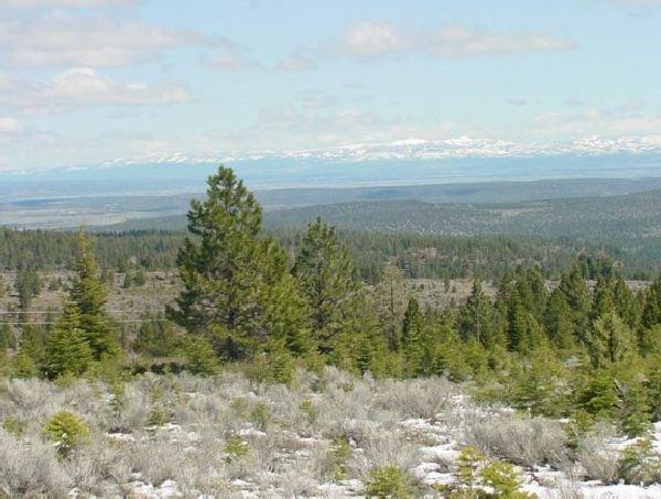 CA LAND, 1 AC. CALIFORNIA PINES, RECREATION-B&A $159/mo - 6