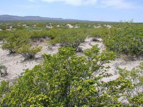 NM LAND, LUNA COUNTY STRAIGHT SALE - NO RESERVE - 5