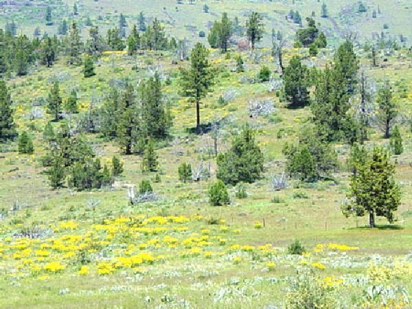 GOV: CA LAND, 1 AC. CALIFORNIA PINES - MODOC COUNTY