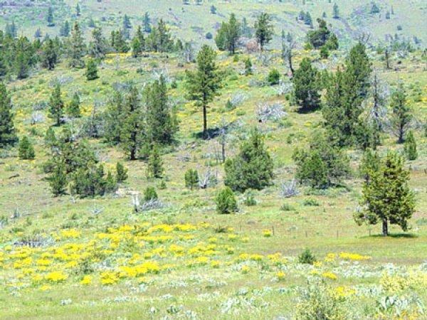 California Land, 1 AC. California Pines - B&A $159/mo