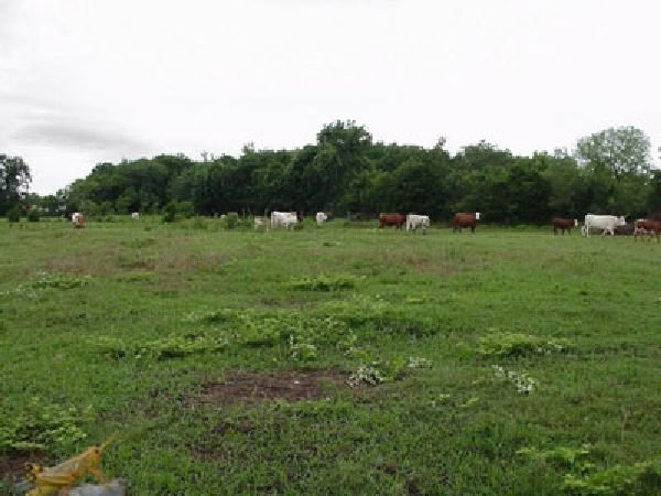TX LAND, 40 AC. LOVING COUNTY, INVEST!, B&A $249/mo