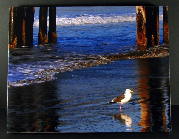 Gull Reflection - Stretched Canvas Giclée