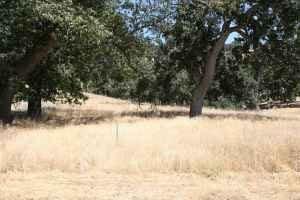 GOV: CA LAND, 1.19 AC. - BEAR VALLEY SPRINGS!