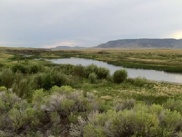 GOV: CO LAND, 5 AC. STRAIGHT SALE MOUNTAIN RANCHETTE! - 4