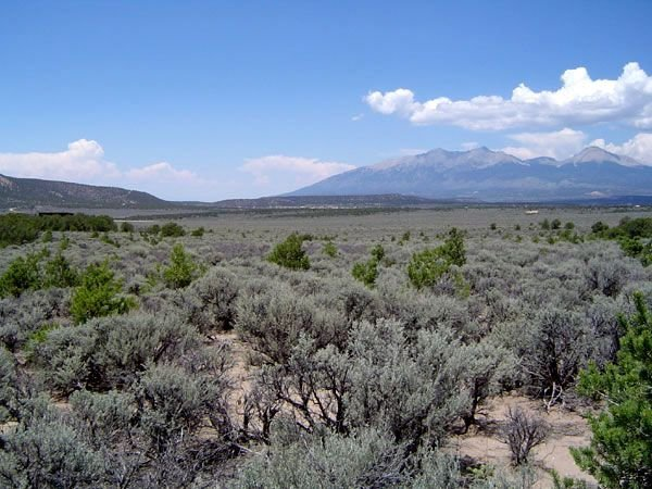 GOV: CO LAND, 5 AC. STRAIGHT SALE MOUNTAIN RANCHETTE! - 6