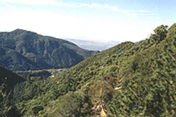 GOV: CA LAND, CEDARPINES HIGHLANDS STRAIGHT SALE - 3