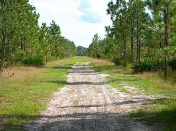 40: GOV: FL LAND, 1.25 AC. DISNEY & BEACH - STRAIGHT SA - 2