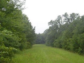 GOV: TX LAND, $9,700@$139/mo DEERWOOD LAKES-50 MILES TO
