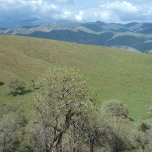 GOV: CA LAND, 5 AC., $19,741@$229/mo RECREATION, INVEST