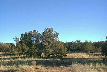 GOV: AZ LAND, 40 AC. $19,781@$276/mo - NAVAJO COUNTY!