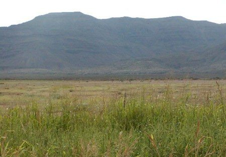 GOV: TX LAND, 80AC. REEVES COUNTY STRAIGHT SALE ACRES