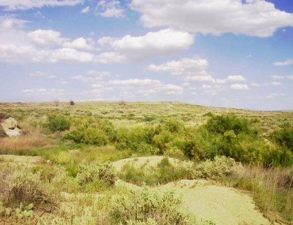 GOV: CO LAND, GOLF/LAKE COMMUNITY STRAIGHT SALE LAND! - 4